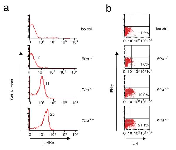 Extent of IL-4Rα expression influences T H 2 cell differentiation. CD4 + T cells from Il4ra +/+ , Il4ra +/- , and Il4ra -/- Balb/c mice were activated with 2 μg/ml anti-CD3 and 1 μg/ml anti-CD28 for 92 h. ( a,b ) IL-4Rα surface expression was analyzed by flow cytometry ( a ) or cells were cultured under T H 2 conditions for 92 h and intracellular IL-4 and IFN-g were measured ( b ). In ( a ), the numbers indicate MFI and in ( b ) they indicate the percent of cells producing IL-4. The experiment was performed three times with 2 to 4 mice per group in each experiment.