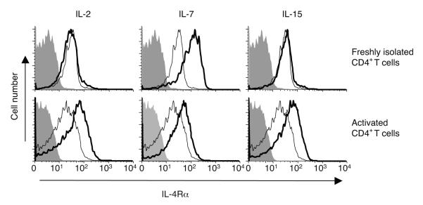 Other STAT5-activatingn cytokines can increase IL-4Rα expression. Freshly isolated T cells (top) and T cells pre-activated with anti-CD3 and anti-CD28 (bottom) were treated with the indicated cytokines and stained for IL-4Rα surface expression (thin line, no cytokine; thick line, cytokine). The experiment shown is representative of four independent experiments.