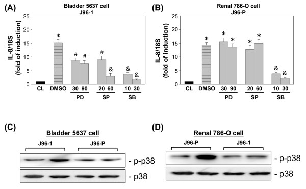 Effect of MAPK inhibitors on the regulation of IL-8 expression in uroepithelail cells . (A) 5637 cells were kept as controls (CL) or invaded with type 1 fimbriated J96 (J96-1) for 4 h. (B) 786-O cells were kept as controls (CL) or invaded with P fimbriated J96 (J96-P) for 4 h. Before being kept as controls or invaded with J96, cells were pretreated with PD98059 (PD), SP600125 (SP), or SB203580 (SB) separately for 1 h. Data are normalized against 18S rRNA level and presented as fold changes in comparison to control cells (CL) and. The results are shown as mean ± SEM. * P