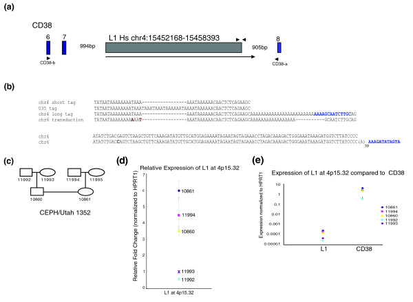 Characterization of L1 at 4p15.32. (a) Diagram of L1 at 4p15.32 and the surrounding region. The arrow designates the L1 transcript. Blue boxes indicate exons of the CD38 gene, with exon number designated. Oligonucleotides CD38-a and CD38-b are indicated. Unmarked triangles indicate the positions of oligonucleotides used in L1 TaqMan qPCR assay. (b) Alignments of L1 at 4p15.32 3' end and related sequences. 'chr 4 short tag' - the major 3' expression tag cloned from this site. 'chr4 long tag' - longer 3' expression tag and 3' RACE sequence cloned from this site. 'chr6 transduction' - paralogous, transduced sequence downstream of L1 on chromosome 6. 'U35' - similar distinct 3' expression tag that cannot be mapped to the human reference genome. 3' end target site duplications are highlighted in blue. Single nucleotide differences in the chromosome 6 sequence are highlighted in dark red. (c) Diagram of the pedigree of the CEPH/UTAH individuals used in this study. (d) Relative expression of the L1 at 4p15.32 in lymphoblastoid cell lines from CEPH individuals. Expression is in arbitrary units normalized to HPRT1. Error bars indicate ± standard deviation from three replicates. (e) Expression of CEPH individuals of the L1 at 4p15.32 compared to flanking exons of CD38 , normalized to HPRT1. Expression is plotted on a logarithmic scale so that levels for both amplicons can be clearly visualized. Error bars represent ± standard deviations from three replicates. All data are representative of at least two biological replicates.