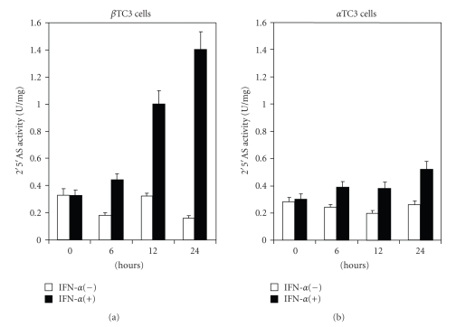 Enzyme activity of 2′5′AS in non-stimulated and IFN- α stimulated beta TC3 and alpha TC3 cells. Beta TC3 (a) and alpha TC3 (b) cells were incubated in the presence or absence of 500 U/ml of IFN- α . After the indicated time periods, cell lysates were prepared. The lysates were incubated with 0.15 μ Ci α 32 P-ATP for 120 minutes at 30°C in the presence of 100 μ g/mL poly(I:C), and then separated by ascending TLC. The generated 2′5′A were quantitated by PhosphorImager analysis. Enzyme activity was expressed in units per milligram ( n = 4, standard deviations varied between 6–13%).