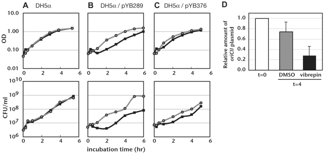 Influence of vibrepin on an E. coli strain bearing an RctB-dependent plasmid in the absence of kanamycin. A–C) DH5α (A), DH5α/pYB289 (B), or DH5α/pYB376 (C) were incubated in LB media in test tubes with either vibrepin (16 µg/ml, thick black lines) or DMSO (gray lines). OD 600 nm and colony forming units (CFU) were determined at the indicated times. Representative growth curves from 3 or more independent experiments are presented. D) The relative amount of the oriCII -based plasmid pYB289 in DH5α after 4 hr of treatment with vibrepin (16 µg/ml) or DMSO. The amount of pYB289 relative to chromosomal DNA was determined before (t = 0) and 4 hrs after treatment (t = 4) using Southern hybridization. The relative amount of pYB289 at t = 0 was set as 1; the mean and standard deviations after 4 hr were calculated from 3 independent experiments.