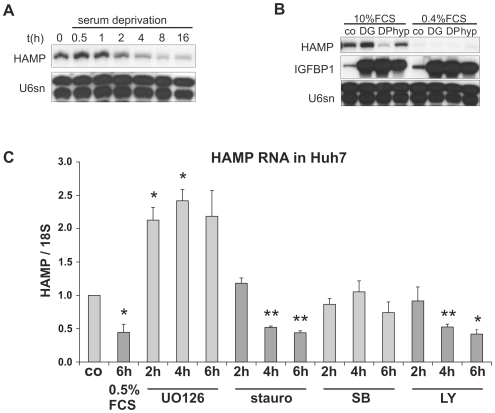 Response of hepcidin transcript levels to serum deprivation and protein kinase inhibition. ( A ) Serum withdrawal rapidly decreased hepcidin transcript levels in Huh7 cells. ( B ) After 40 h of FCS reduction from 10% to 0.4%, hepcidin transcripts were hardly detectable by RPA in HepG2 cells, whereas hypoxic IGFBP1 induction was not affected. Representative of three independent experiments. U6sn RNA served as loading control. ( C ) Exposure of Huh7 cells to protein kinase inhibitors revealed that the pan kinase inhibitor staurosporine (stauro; 0.5 µM) and the PI3 kinase inhibitor LY294002 (LY; 10 µM) reduced hepcidin expression similar to serum deprivation, whereas the <t>p38</t> SAP kinase inhibitor <t>SB202190</t> (SB; 10 µM) had no effect and the MEK1/2 inhibitor UO126 (1 µM) even increased HAMP/18S ratios. Data are results of qRT PCR analyses and given as means of three independent experiments±SEM; *p