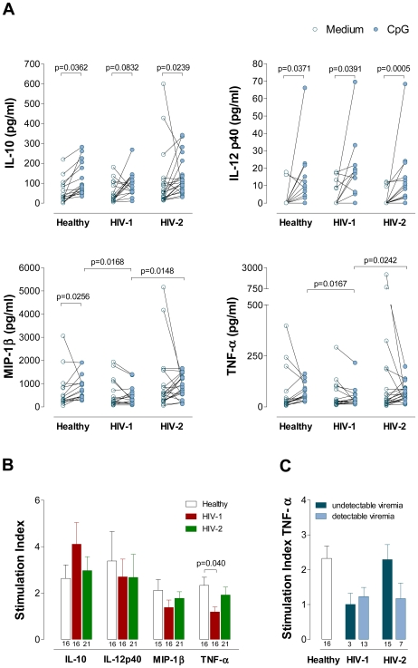 IL-10, IL-12p40, MIP-1β and TNF-α levels upon CpG stimulation in Healthy, HIV-1 and HIV-2 cohorts. Freshly isolated PBMC were cultured in the absence or in the presence of CpG. After 22 hours, culture supernatants were harvested and analyzed for the secretion of IL-10, IL-12p40, MIP-1β and TNF-α using the Luminex multiplex assay. ( A ) Cytokine levels. Each dot represents one individual. The levels observed in non-stimulated cultures (open symbols) are connected with those documented in the presence of CpG (closed symbols), and were compared using Wilcoxon test. ( B ) Stimulation indexes defined as ratio between the level of cytokine in the supernatant of the culture in the presence of CpG and in its absence (medium) in the three cohorts. ( C ) The HIV-2 and the HIV-1 cohorts were split according to the presence of detectable and undectable viremia and the stimulation indexes for TNF-α are shown. Bars represent mean±SEM. Numbers under the bars represent the total individuals analyzed. The subgroups of patients analyzed are representative of their respective patient population described in Table 1 with respect to CD4 counts and viral load. The Mann-Whitney test was used to compare the data of the HIV-2, HIV-1 and healthy cohorts, and the significant p values (