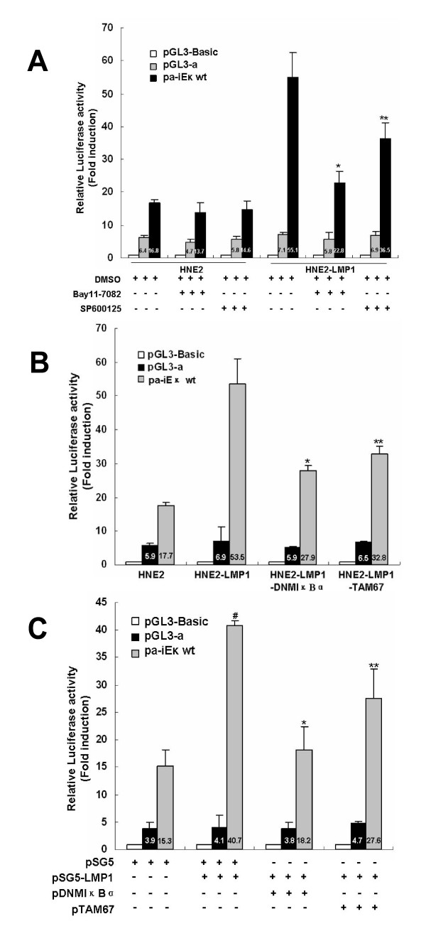 Inhibitors and dominant negative mutants targeting for NF-κB and AP-1 pathways attenuated LMP1-augmented human iE κ activities . (A) Bay11-7082 and SP600125 inhibited the activities of iE κ induced by stable expression LMP1. HNE2 and HNE2-LMP1 cells were transfected with pα-iE κ wt, pGL3-α or pGL3-Basic vector, and pRL-SV40 as an internal control for transfection efficiency. 24hr after transfection, cells were treated with Bay11-7082 (20 μM), SP600125 (20 μM) or 0.1% DMSO for 12hr. Cells were harvested at 36 h after transfection and subjected to the luciferase assay. Statistical significance: * P