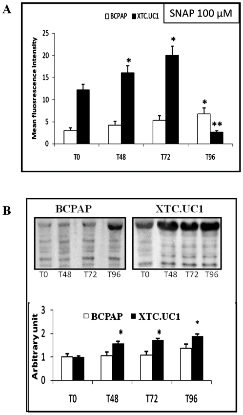 Effect of 100 µM SNAP treatment during 96 h on XTC.UC1 and BCPAP cell lines ( N = 5 per cell line). 1A: Nitric oxide measurement with the FACScan cytometer (10 µM final DAF2/DA dye). Results are expressed in arbitrary fluorescent units as mean values±SEM. * P ≤0.05 versus T0. ** P ≤0.05 versus T0 and T72. 1B: Evaluation of protein nitration by Western blotting using antibody raised against nitrotyrosine-modified proteins. Immunoblots are quantified by densitometric analysis and expressed in arbitrary units (relative to α-tubulin) as mean values±SEM. * P ≤0.05 versus T0.