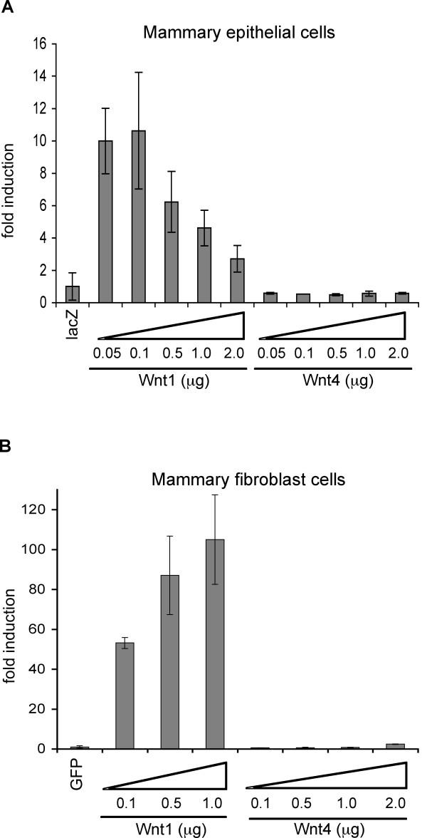 Wnt4 does not induce canonical Wnt signaling in mammary epithelial or fibroblast cells in vitro . (A) Wnt reporter assay of primary mammary epithelial cells. Primary mammary epithelial cells were transfected with superTOP-flash reporter gene, a Renilla luciferase gene (a transfection control), and various amounts of Wnt4 expression vector (0.05~2.0 μg). Luciferase activity was measured 48 hrs after transfection, and results corrected for transfection efficiency (dividing by Renilla luciferase activity). Fold induction was calculated with respect to the negative control ( LacZ -transfected cells). A Wnt1 expression vector was used as a positive control. (B) Wnt reporter assay of immortalized mammary fibroblast cells. Mammary fibroblast cells were prepared from FVB-Cdkn2a -/- ( Ink4a/Afr null) female mice as described in Materials and Methods, and superTOP-flash reporter assays were performed as above. Error bars = standard deviation of triplicate samples.
