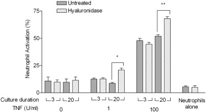 Effects of hyaluronidase on the ability of supernatants from ECs to activate neutrophils morphologically. ECs were cultured for 3 or 20 days and treated with 1 or 100 U/ml TNF for 4 hours. Medium was removed and replaced with PBS/BSA with or without 30 mU/ml hyaluronidase for 30 minutes. The supernatants were collected and added to neutrophils for 5 minutes and their shape change was observed using a microscope to determine the percent activated. For comparison, neutrophils were also treated with PBS/BSA with or without hyaluronidase. Data are mean ± SEM for 3 experiments. ⁎p