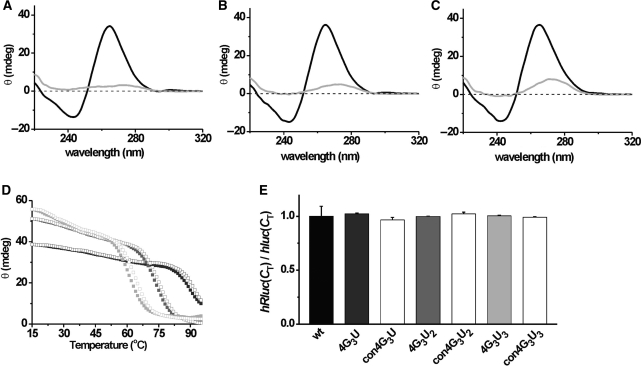 In vitro stability and in vivo abundancy of the quadruplex motifs. The CD scans (black) show a positive band around 264 nm and negative maxima around 240 nm for 4G 3 U ( A ), 4G 3 U 2 ( B ) and 4G 3 U 3 ( C ), characteristic for a parallel stranded quadruplex motif, while the respective control sequences; con4G 3 U ( A ), con4G 3 U 2 ( B ) and con4G 3 U 3 ( C ) does not show any quadruplex characteristic peaks (grey). In CD melting experiments ( D ), denaturing (hollow) and annealing (solid) curves are almost identical and show a T m of > 95, 73 and 61°C for 4G 3 U (dark grey), 4G 3 U 2 (grey) and 4G 3 U 3 (light grey) RNA-quadruplex motifs, respectively. ( E ) Relative hRluc mRNA levels for different constructs determined by real-time PCR assays [ hRluc ( C T )] is normalized to hluc mRNA levels [ hluc ( C T )], as reported earlier ( 35 ). Error bars represent standard deviation of three independent experiments.