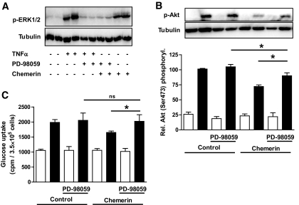 Prevention of chemerin-induced insulin resistance by ERK inhibition. A : Skeletal muscle cells from different donors were precultured with or without 50 μmol/l of the specific ERK inhibitor PD 98059 for 15 min before starting the administration with chemerin or TNF-α. The cells were then treated with chemerin for 30 min and as a control with 2.5 nmol/l TNF-α for 10 min. Total cell lysates were resolved by SDS-PAGE and immunoblotted with a phosphospecific antibody for ERK-1/2 and tubulin for loading control. Representative blots are shown. B and C : After pretreatment for 15 min with PD 98059 (50 μmol/l), skeletal muscle cells from different donors were treated with chemerin overnight. After insulin stimulation, total cell lysates were resolved by SDS-PAGE and immunoblotted with a phosphospecific antibody for Akt and tubulin for loading control. Representative blots are shown. Data are the means ± SEM of four independent experiments. Glucose uptake was measured as outlined in the research design and methods section. Data are the means ± SEM of three independent experiments. *Significantly different from respective insulin-stimulated control. ■, insulin; □, basal.