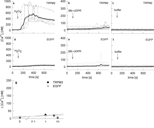 Effect of 8-Br- N 1 -cIDPR on Ca 2+ signalling in HEK293 cells overexpressing TRPM2 HEK-293 cells transfected with ( a )–( c ) pIRES2-EGFP-TRPM2 (TRPM2) and ( d )–( f ) pIRES2-EGFP (EGFP control) were loaded with Fura-2AM and subjected to Ca 2+ imaging. Time points of addition of a maximal concentration of ( a and d ) 100 or 300 μM H 2 O 2 , ( b ) and ( e ) 1 mM 8-Br- N 1 -cIDPR, or ( c ) and ( f ) buffer are indicated. Characteristic tracings of a representative experiment are shown. ( g ) Concentration–response curve of 8-Br- N 1 -cIDPR in transfected HEK-293 cells ( n =6–67) represented as means±S.E.M. of single tracings from time points 100–600 s (the Ca 2+ peak).