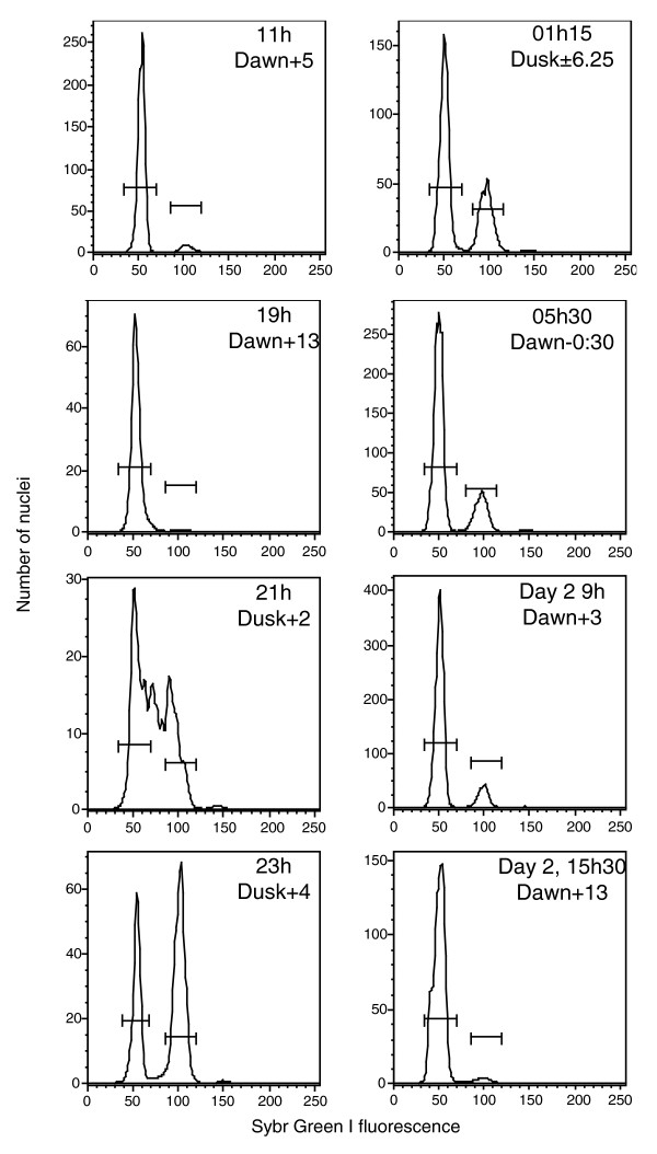 Cell cycle changes during the day-night cycle of harvesting. Example DNA content histograms of nuclear extracts taken from 1N cultures at different times are shown. The time point at 15 h on day 1 is not shown but had a similar distribution to that at 19 h on day 1 and 15 h30 on day 2. RNA was not collected at 15 h30 on day 2, but nuclear extracts (shown here), flow cytometric profiles, and Fv/Fm confirmed cells had returned to the same state after a complete diel cycle. Extracted nuclei were stained with Sybr Green I and analyzed by flow cytometry.