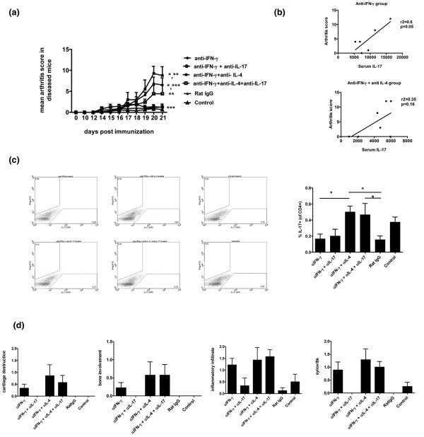 Effect of neutralization of IL-17 in the presence or absence of anti-IFN-γ and/or anti-IL-4 during the initiation phase of arthritis. (a) Neutralizing antibody to IFN-γ (clone R46A2, 100 μg/mouse/day), and/or neutralizing antibody to IL-4 (clone 11B11, 100 μg/mouse/day), and neutralizing antibody to IL-17 (clone M210, 100 μg/mouse/day) was administered intraperitoneally from day 10 to 20 after immunization with collagen and complete Freund's adjuvant (CFA). Rat IgG was used as isotype control. The control group did not receive any antibody. Arthritis was assessed from day 10 by clinical scoring. n = 8 to 9/group. * P