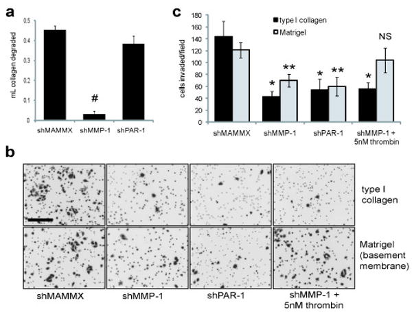 Both the collagenase and PAR-1 activating functions of MMP-1 are required for melanoma cell invasion. ( a ) VMM12 shRNA lines were used in a type I collagen degradation assay. Cells were embedded in type I collagen, and after 48hr, the media released from the collagen gel were weighed to determine the amount of collagen that had been degraded. # p