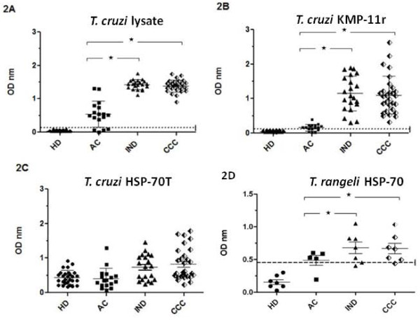 ELISA for total IgG antibody levels from acute (AC), indeterminate (IND) and cardiac chronic (CCC) chagasic patients and healthy individuals (HD) against T. cruzi lysate (2A), KMP-11 (2B), truncated T. cruzi HSP-70 (TcHSP-70T) (2C), and T. rangeli HSP-70 (2D) recombinant proteins . Values are given as optical densities at 405 nm. The dotted line represents the cut-off values based on the mean of healthy individual values plus 3 standard deviations. Horizontal lines on each group represent mean and standard deviation values, the mean being the larger one. Statistically significant differences among chagasic groups are represented by an asterisk.