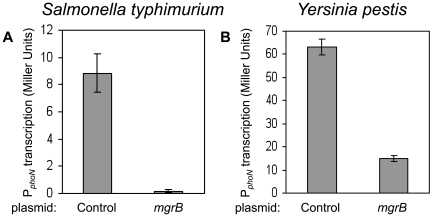 Inhibition of PhoP-regulated transcription by MgrB in Salmonella typhimurium and Yersinia pestis . (A) Salmonella enterica serovar Typhimurium strain 14028s carrying the P phoN - lacZ reporter plasmid pNL2 and either a plasmid expressing Salmonella mgrB (pAL43) or a control plasmid (pEB52) were grown in LB with antibiotics and 1 mM IPTG. The amino acid sequence of MgrB from strain 14028s (data not shown) is identical to the sequence from strain LT2 (shown in Figure 6 ). (B) Y. pestis KIM6 carrying pNL2 and either a plasmid expressing the Yersinia pestis mgrB (pAL42) or a control plasmid (pEB52) were grown in BHI with antibiotics and 1mM IPTG. For each strain, the mean and standard deviation for at least three independent cultures are shown.