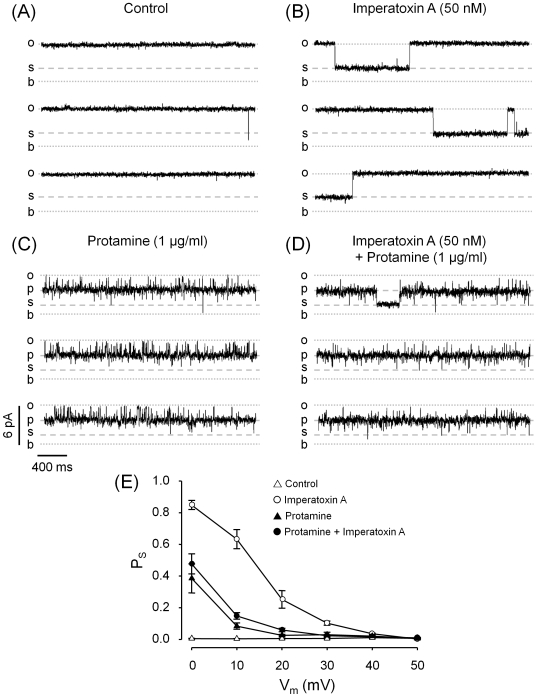 Effect of protamine in combination with imperatoxin A (IpTx A ). RyR2 channels fully activated by the combined action of cytosolic Ca 2+ (10 µM) and caffeine (5 mM) were used as control ( A ). Subsequently, 50 nM IpTx A ( B ) or 1 µg/ml protamine ( C ) were added. To test the combined effect of 1 µg/ml protamine + 50 nM IpTx A two sets of experiments were performed: one adding protamine first and then IpTx A and the other, switching the order in which these agents were added. The results were the same in both sets of experiments. A representative recording is displayed in panel ( D ). All traces shown were performed at V m = +20 mV. Current levels for the baseline ( b ), full open state (o), protamine-induced substate ( p ) are indicated. A small substate ( s ) is indicated. In panels ( A ) and ( B ) the amplitude of this substate is ∼30% of the full open state and in panels ( C ) and ( D ) it is ∼30% the amplitude of the protamine-induced substate. ( E ) Probability of substates at the s level (P S ) as a function of holding voltage of RyR2 channels under control conditions (open triangles), exposed to 50 nM IpTx A (open circles), 1 µg/ml protamine (filled triangles) and 50 nM IpTx A +1 µg/ml protamine (filled circles). Values are means±SEM (* P