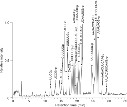 Base peak chromatogram of the RNaseT1 digest of yeast U4 snRNA isolated from the Lsm3-associated RNP complex. The gel piece containing U4 snRNA was in-gel digested with RNaseT1 and subjected to the LC-MS analysis. Major oligoribonucleotide peaks assigned as RNase T1 fragments of yeast U4 snRNA are indicated by arrows with the corresponding sequence. Detailed data for MS/MS-based assignment of each fragment are given in Supplementary Table S3 .