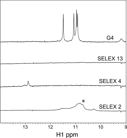 1D 1 H spectra of G-quartet DNA and selected SELEX DNA sequences. A portion of the 1D 1 H spectra (9–14 p.p.m.) collected on 0.5 mM G4 DNA [dTTGGGGTT] 4, SELEX 13, SELEX 4 and SELEX 2 at 25°C in 50 mM Tris pH 8, 150 mM KCl and 10% D 2 O. Spectra were scaled using a resolved H1' ribose signal. The asterisk (*) indicates broad peaks specifically seen in SELEX 2, a sequence that was not shifted by the ICP27 in EMSA experiments ( Figure 6 ).