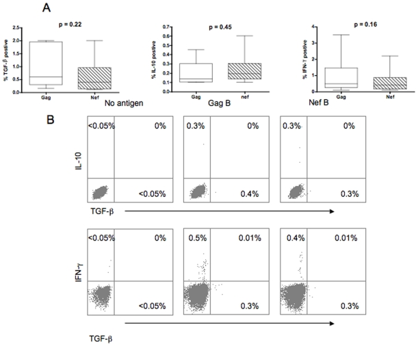 TGF-β positive, IL-10 positive, and IFN-γ positive HIV-specific CD8+ T cell populations are distinct. PBMC were stimulated with HIV peptides then stained with anti-IFN-γ FITC, anti-TGF-β PE, anti-CD3 AmCyan, anti-CD4 PerCP Cy5.5, and anti-CD8 PE Cy7, anti-IL-10 APC, and analyzed by flow cytometry. Samples were first gated on the CD3+/CD8+ lymphocyte population then the percent of TGF-β, IFN-γ, and IL-10 positive CD8+ T cells were determined. (A) Data from individuals with significant cytokine expression and analysis were performed by Mann-Whitney U test. (B) Representative plots of the number of HIV-specific CD8+ T cells expressing TGF-β, IFN-γ, and IL-10 after subtraction of the back ground values.