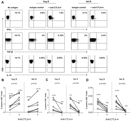 CTLA-4 blockade decreases TGF-β and IL-10 expression by HIV-specific CD8+ T Cells. PBMC (n = 6) were stimulated with HIV peptides in the presence of anti-CTLA4 (or isotype control), then stained with anti-IFN-γ FITC, anti-TGF-β PE, anti-IL-10 APC, anti-CD3 AmCyan, anti-CD4 PerCP CY5.5, anti-CD8 PE CY7, and analyzed by flow cytomerty. Samples were first gated on the CD3+/CD8+ lymphocyte population then the percent of TGF-β, IL-10, and IFN-γ positive cells were determined. Results were expressed as percent of HIV-specific CD8+ T cells expressing TGF-β, IL-10, or IFN-γ after subtraction of the back ground. (A) Representative plots of HIV-specific CD8+ T cells expressing TGF-β, IL-10, or IFN-γ in the presence or absence of anti-CTLA-4. (B-D) Dashed line represents the cutoff for significant TGF-β (B), IL-10 (C), and IFN-γ (D) expression. Percentages in between brackets are median values. The two dots joined by a line represent the values obtained from the same individual and analysis was performed by paired t- test.