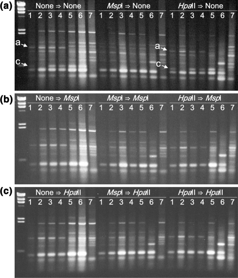 Effects of the DNA methylation-sensitive restriction enzyme on the RAPD bands 143a and 143c ( arrowed ). First, non-, <t>Msp</t> I- and <t>Hpa</t> II-digested DNA samples were amplified by PCR using the decamer primer No. 143. Then, PCR products were digested with ( a ) no restriction enzyme, (b) Msp I or ( c ) Hpa II. Lambda DNA Hin dIII digests in the furthest left lane. Parent A, 2H21-2 (S 1 ), 2H22-1 (S 3 ), 3H94-17 (S 4 ), 4H130-1 (S 5 ), 5H 123-9 (F 1 ), 4H105-7 (S 6 ) ( lanes 1–7 )