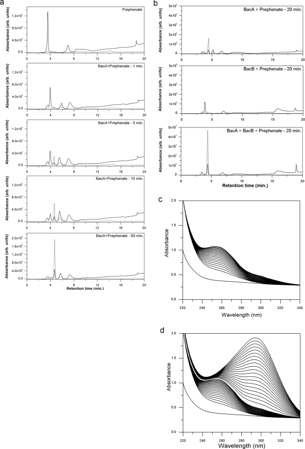 <t>HPLC</t> and UV spectrophotometric studies of the products of BacA and <t>BacB</t> enzymes. a , HPLC elution profiles of the BacA product with prephenate at different time points (1, 5, 10, and 60 min; 220 nm, 280 nm). b , HPLC elution profile of prephenate incubated with BacA alone, prephenate with BacB alone and prephenate with BacA and BacB. c , UV spectrophotometric time course measurement of the catalytic activity of BacA on prephenate. These spectra were recorded at intervals of 30 s. d , UV spectrophotometric time course measurement of the catalytic activity of BacB. These spectra were recorded at intervals of 30 s.