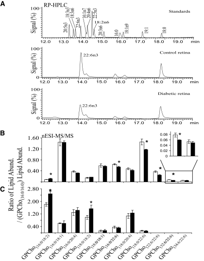 Fatty acid analysis by RP-HPLC and comparative MS/MS analysis of GPCho lipids in control ( n = 3) and diabetic ( n = 3) animals at 3–6 weeks post-STZ injection. A : Identification and quantification of diabetes-induced changes in total retina saponified fatty acids. Top : RP-HPLC chromatogram of a mixture of authentic fatty acid standards. Middle : Control retina saponified fatty acids. Bottom : Diabetic retina saponified fatty acids. B : Ratiometric analysis of changes in GPCho lipid abundance (Abund.) between control (□) and diabetic (■) retina. GPCho species were detected by nESI-MS/MS using PI m/z 184 and further characterized as described in research design and methods. C : Ratiometric analysis of changes in GPCho lipid abundance between control and diabetic erythrocytes. Data are presented as means ± SD. *Statistical significance at P