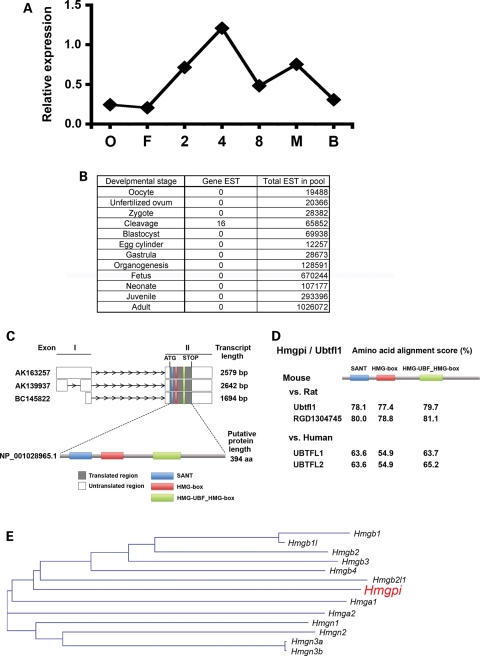 In silico analysis of Hmgpi expression. ( A ) Previous microarray analysis of Hmgpi expression. Hmgpi expression appeared at the 2-cell stage, peaked at the 4-cell stage and then decreased ( 3 ). ( B ) Expression sequence tag (EST) frequencies in Unigene cDNA libraries. Out of 4.7 million mouse ESTs, 16 Hmgpi clones were exclusively detected at the cleavage stages: 9, 2 and 5 ESTs from 2-cell, 4-cell and 8-cell libraries, respectively. ( C ) Exon–intron structures and a putative protein structure of Hmgpi. Hmgpi has three exon–intron models and one protein model. Predicted protein domains are also shown. ( D ) Conserved domains of Hmgpi / Ubtfl1 gene in mouse, rat and human. Pairwise alignment scores of conserved domains between species were shown. ( E ) Phylogenetic tree of gene nucleotide acid sequences containing HMG domains determined by a sequence distance method and the neighbour-joining (NJ) algorithm ( 41 ) using Vector NTI software (Invitrogen, Carlsbad, CA, USA).