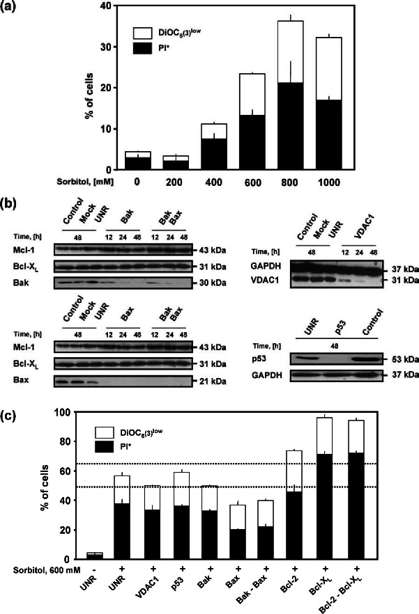 """Involvement of the Bcl-2 protein family in hyperosmotic stressinduced death of A549 cells . (a) A549 cells were treated with the indicated dose of sorbitol for 6 h, followed by the cytofluorometric assessment of mitochondrial membrane potential (DiOC 6 (3) staining) and viability (PI staining). White columns illustrate the percentage of cells with a low mitochondrial membrane potential but still viable (DiOC 6 (3) low ). Black columns indicate the percentage of cells with disrupted plasma membrane (PI + ). Data are mean of duplicate experiments ± SEM. (b, c) A549 cells were transfected with empty liposomes (Mock) or with siRNAs targeting Bax, Bak, Bcl-2, Bcl-X L , p53, the voltage-dependent anion channel 1 (VDAC1) or an irrelevant """"unrelated"""" control (UNR). (b) To check for the effects of siRNAs, total proteins were purified from transfected A549 cells at different time points (12, 24 or 48 h), separated according to molecular weight on mono-dimensional SDS-PAGE, and finally analyzed by immunoblotting with the indicated antibodies. Antibodies specific for Mcl-1 and Bcl-X L or for GAPDH were employed as loading controls. (c) A549 cells transfected for 48 h with the indicated siRNAs were treated with 600 mM sorbitol for additional 6 h, then analyzed at FACS for mitochondrial membrane potential (DiOC 6 (3) staining) and viability (PI staining). White columns depict the percentage of cells that have dissipated the mitochondrial membrane potential but are still viable (DiOC 6 (3) low ). The percentage of cells with disrupted plasma membrane (PI + ) is illustrated by black columns. Data are mean of duplicate experiments ± SEM. Dashed lines indicate the range of statistical insignificance from control cells ( p > 0.05, ± 3 SEM). For additional details please see also """"Materials and methods"""""""