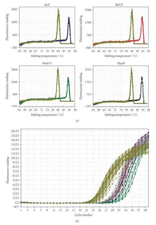 An example of the <t>SYBR</t> Green <t>RD-qPCR</t> assay of 5-LOX DNA methylation (shown are graphs obtained from 10 cerebellar samples). The samples were digested with the methylation-sensitive endonucleases (AciI, BstUI, HinP1I, and HpaII) as described in Material and Methods. The PCR reaction for the promoter-5′UTR (10 samples each: AciI = blue, BstUI = red, HinP1I = green, and HpaII = gray) and corresponding input control regions (shown in yellow) were carried out in separate tubes. Panel A shows the dissociation curve data, which indicate the presence of only one PCR product (peak) for each specific set of primers (fluorescence (first derivative of the raw fluorescence reading multiplied by −1) on the Y-axis versus the PCR product melting temperature (°C) on the X-axis). Panel B shows examples of the amplification plots used for calculating the quantitative data (the amplification plots fluorescence (baseline-corrected raw fluorescence) on the Y-axis versus cycle number on the X-axis). In this assay, the threshold cycle is inversely proportional to the log of the initial copy number. In other words, the more template that is present initially, the fewer the number of cycles required for the fluorescence signal to be detectable above background.