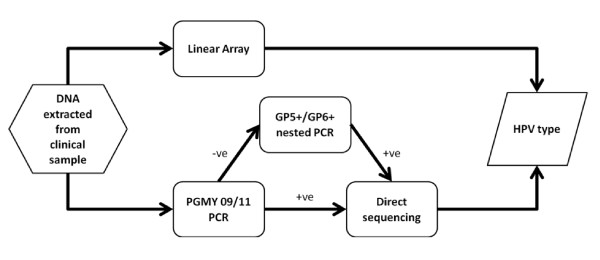 Methodological flowchart of DNA analyses performed . DNA extracted from clinical samples was subjected to both Linear Array and PGMY09/11 PCR analysis. In the event of a positive Linear Array result, the HPV subtype was known immediately. In the case of a positive PGMY result, direct sequencing (using the GP5+ internal primer) enabled the subtype present to be determined. In the case of a PGMY negative result, a further nested PCR amplification step was performed using the GP5+/GP6+ primer set. Subsequent positive results were then directly sequenced using the GP5+ primer alone. Samples negative for both Linear Array and nested PCR were classified as free from infection.