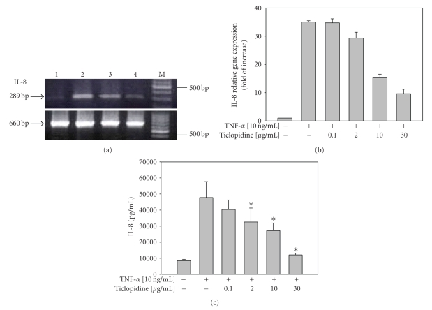 Reduction of IL-8 mRNA and protein levels by ticlopidine in HUVECs. HUVECs were incubated with serum-free medium for 12 hours before different concentrations of ticlopidine were added, after 12 hours incubation cells were stimulated with/without TNF- α (10 ng/mL) for another 24 hours. (a) Total RNA was extracted and analyzed by RT-PCR. Lane 1, without TNF- α ; lane 2, TNF- α (10 ng/mL) alone; lane 3, TNF- α + ticlopidine (0.1 μ g/mL); lane 4 TNF- α + ticlopidine (30 μ g/mL); M denotes molecular size marker. The lower panel is β -actin as the internal control. Results are representative one of three independent experiments. (b) Relative amount of IL-8 mRNA level was determined by quantitative real-time RT-PCR. (c) Culture supernatants were analyzed by ELISA. Data are expressed as the mean ± SEM of duplicate wells and are representative of six individual experiments. Significantly different versus TNF-treated alone* P