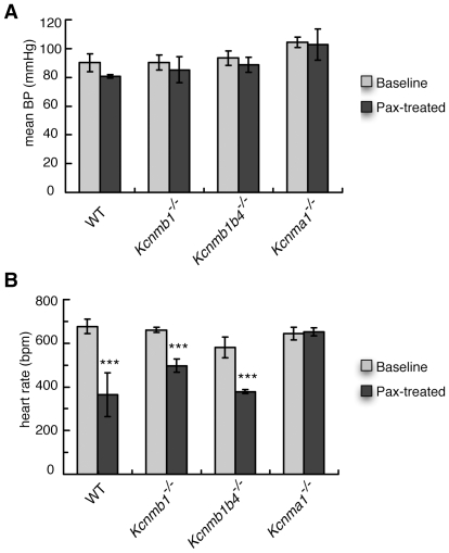 Cardiovascular function in wild-type (C57 black), Kcnmb1 −/ − , Kcnmb1/b4 −/− , and Kcnma1 −/− mice treated with 8 mg/kg paxilline (Pax). (A) Blood pressure and (B) Heart rate. ***, P