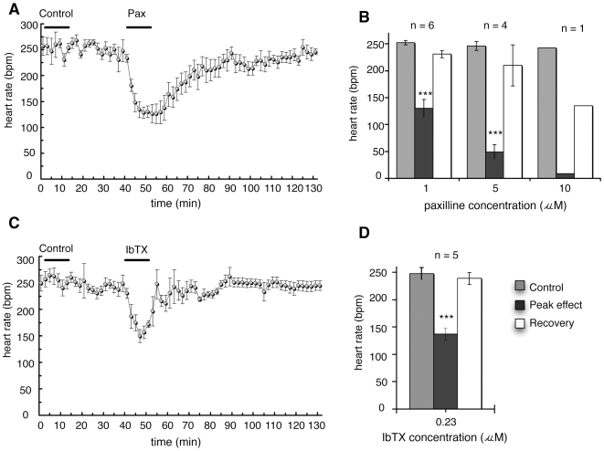 The effect of paxilline and iberiotoxin on heart rate in the isolated rat heart. (A) 1 µM paxilline (Pax) was added at time = 40 min and infused for 10 min, preceded by a control infusion of Krebs-Henseleit perfusion fluid with 0.1% DMSO ( n = 5). (B) Heart rate before, during and after infusion at time zero of different concentrations of paxilline (1, 5 or 10 µM). The heart rate in response to paxilline is the average of the peak responses following treatment. Toxins dissolved in Krebs-Henseleit solution were perfused through the heart for 12 min. Significance was tested using least significant difference post hoc test after analysis of variance. (C) Heart rate of isolated, perfused rat hearts infused with 0.23 µM iberiotoxin (IbTX) following a control infusion of Krebs-Henseleit fluid (n = 5). (D) Heart rate before treatment (saline control), at peak effect following infusion of iberiotoxin (n = 5), and following recovewry. Significance was tested using a paired Student's t-test. All data are mean ± S.E.M. *** P