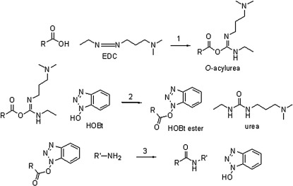 Reaction for the coupling of the carboxylate groups of the protein with an amine in the presence of EDC and HOBt.