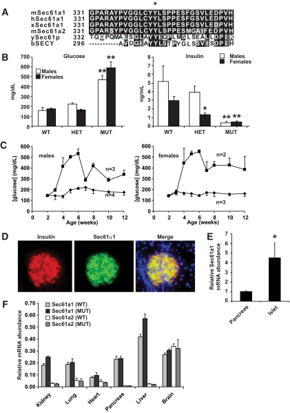 Sec61a1 is a conserved β-cell gene whose mutation is associated with diabetes due to hypoinsulinemia. A : Amino acid comparison of mouse Sec61α1 residues 330–360 to the paralog mSec61α2 and orthologs (h, human; x, Xenopus ; y, yeast; b, bacteria). The asterisk shows Tyr344. B : Fasted plasma glucose and insulin were analyzed in Sec61a1 +/+ (wild type), Sec61a1 +/Y344H (HET), and Sec61a1 Y344H/Y344H (MUT) mice, aged 12 weeks, fed HFD. Males ( n = 4–10); females ( n = 9–13). Values shown are means ± SEM. Statistical assessments were made using a two-tailed Student t test assuming unequal variances (versus sex-matched wild-type littermates); * P