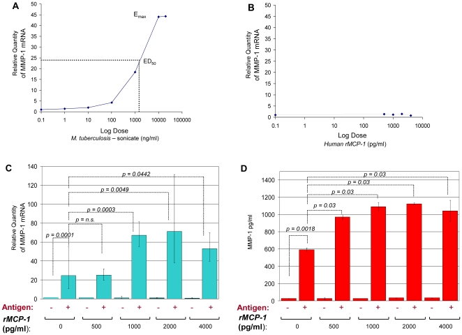 MCP-1 increases MMP-1 expression inTHP-1 monocytic cells stimulated by M. tuberculosis-sonicate antigens . We measured the relative changes in MMP-1 gene expression by real-time PCR. Data are presented as the fold change in gene expression normalized to the endogenous reference gene PDHB and relative to untreated controls (RQ values). A, MMP-1 expression following 24 hours in vitro stimulation of THP-1 cells with the indicated amounts of M. tuberculosis- sonicate antigens. The effective dose 50 (ED50) of the M. tuberculosis -sonicate is indicated. B, MMP-1 expression data following 24 hours in vitro stimulations of THP-1 cells with the indicated amounts of human recombinant MCP-1 (rMCP-1). Graph A and B show data from one of three experiments. C, MMP-1 expression data for non-stimulated (−) and M. tuberculosis -sonicate antigen stimulated (+) THP-1 cells that were cultured for 24 hours with the indicated amounts of human rMCP-1. The results presented are from three independent experiments showing minimum and maximum RQ values. D, MMP-1 secretion levels for non-stimulated (−) and M. tuberculosis -sonicate antigen stimulated (+) THP-1 cells that were cultured for 48 hours in serum-free media with or without increasing amounts of human rMCP-1. Results presented are from three independent experiments and the bars indicate the standard deviation from the mean. The ED50 of M. tuberculosis -sonicate was used to stimulate the cells for the experiments shown in B, C, and D. The p- values from Wilcoxon-Mann-Whitney U-tests of comparisons of two independent variables are shown in C and D. Antigen = M. tuberculosis -sonicate 1000 ng/ml.