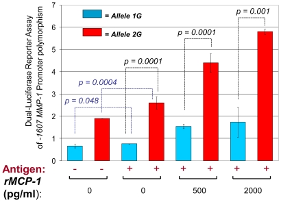 Luciferase activity in response to stimulation with M. tuberculosis -sonicate antigens and human rMCP-1 is greater in THP-1 cells transfected with the -1607 MMP-1 2G variant than in those transfected with the MMP-1 1G promoter variant. The activities of promoters carrying the -1607 alleles 1G and 2G were compared using a dual-luciferase assay system (see Materials and Methods for details). Cells were stimulated overnight with or without M. tuberculosis -sonicate antigens and with the indicated amounts of human recombinant MCP-1. The data are presented as the ratio of Firefly Luciferase signal to Renilla Luciferase (control) signal. The error bars represent the standard deviation of means obtained from four independent experiments. Blue bars indicate cells transfected with plasmids containing the -1607 MMP-1 1G variant and red bars show data from cells transfected with plasmids containing the 2G variant. Addition of human rMCP-1 to cells stimulated with M. tuberculosis -sonicate antigens increased specific luciferase activity in a dose-dependent manner and to a level greater than that induced by M. tuberculosis antigens alone. The p- values from student t-tests are shown. In blue we show the p- values from comparisons of non-stimulated cells and cells stimulated with M. tuberculosis -sonicate antigens alone. Antigen = M. tuberculosis -sonicate 10 ng/ml.