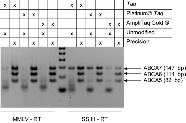 Hot Start DNA polymerase evaluation in triplex one-step RT-PCR amplification of ABCA5, ABCA6 and ABCA7 targets . Reactions contained 0.82 μg of human trachea total RNA and an unmodified oligo(dT) 18 RT primer. The PCR primers were either unmodified, or contained CleanAmp™ Precision modifications. These reactions contained one of the following DNA polymerases: Taq , Platinum ® Taq , or AmpliTaq Gold ® and one of the following reverse transcriptases: M-MLV or SSIII. Reactions with M-MLV were incubated at 42°C, while reactions with SSIII were incubated at 55°C.