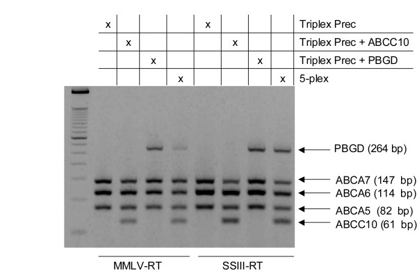 Evaluation of M-MLV and SSIII reverse transcriptases in multiplex one-step RT-PCR amplification of up to five targets . The amplification of increasing number of targets was evaluated by using either M-MLV RT (42°C) or SSIII RT (55°C). Reactions contained an oligo(dT) 18 primer, 0.82 μg of human trachea total RNA, CleanAmp™ Precision primers, and Taq DNA polymerase.