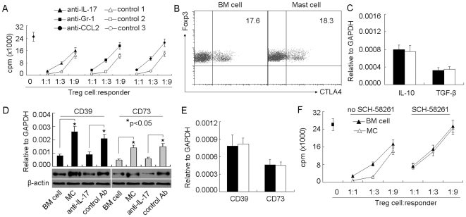 Mast cell-induced IL-17 enhances suppressor function of Treg cells via upregulating CD39 and CD73. (A) The interference of IL-17 impaired the effect of mast cells on the suppressive function of Treg cells. 5×10 6 BMMCs were injected into tumor-bearing mice by i.v. injection. IL-17 or CCL2 neutralizing antibody or Gr-1 depleting antibody was i.p. injected to the mice 1 h, 2 days and 5 days after BMMCs injection. On day 7, tumor-infiltrating Treg cells were isolated for suppression assay. (B and C) Mast cells had no effect on Treg cells expressing CTLA-4, IL-10 or TGF-β. BMMCs were injected into tumor-bearing mice. Seven days later, the tumor-infiltrating lymphocytes were isolated for the analysis of CTLA-4 by flow cytometry. The data showed the gated CD3 + Foxp3 + cells. (B) or IL-10 and TGF-β by real time RT-PCR (C). (D) Mast cells upregulated the expressions of CD39 and CD73 by Treg cells. BMMCs were injected into tumor-bearing mice with IL-17 antibody or control antibody. Seven days later, the tumor-infiltrating Treg cells were isolated for the analysis of CD39 and CD73 by real time RT-PCR and western blot. (E) IL-17 had no direct effect on Treg cells. IL-17 (20 ng/ml) was added to the cultured Treg cells for 12 hours. The cells were collected for the analysis of CD39 and CD73 by real time RT-PCR. F , Blockade of adenosine signaling pathway impaired mast cell-enhanced Treg cell function. BMMCs were injected into tumor-bearing mice. BM cells were used as control. Seven days later, the tumor-infiltrating Treg cells were isolated for suppression assay in the presence or absence of adenosine receptor A 2A antagonist SCH-58261 (100 ng/ml). The data shown were the representative of 2 independent experiments in which the similar results were obtained.