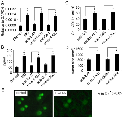 IL-9 strengthens the survival and protumor effect of mast cells in tumor microenvironment. (A and B) Mast cells upregulated the expressions of IL-9 by Treg cells. BMMCs were injected into tumor-bearing mice with <t>IL-17</t> antibody or control antibody. Seven days later, the tumor-infiltrating Treg cells were isolated for the analysis of IL-9 by real time RT-PCR (A). Or the isolated Treg cells were cultured for 48 hours. The supernatant was used for IL-9 ELISA assay (B). (C and D) The interference of IL-9 signaling affected mast cell-mediated MDSC infiltration and mast cell-promoted tumor growth. 5×10 6 BMMCs were injected into tumor-bearing mice (n = 6) by i.v. injection. IL-9 neutralizing antibody or CD25 depleting antibody was i.p. injected to the mice 1 h, 2 days and 5 days after BMMCs injection. On day 12, the tumor-infiltrating lymphocytes were used to analyze Gr-1 + CD11b + MDSCs by flow cytometry (C), and the tumor growth was monitored by measuring the length (L) and width (W) of tumors. The volume (V) of the tumor was calculated by the formula V = (L×W2)/2 (D). (E) IL-9 affected the survival of mast cells in tumor microenvironment. 1×10 6 CFSE-labeled BMMCs were directly injected into tumor tissue with multiple injection sites. IL-9 neutralizing antibody was i.p. injected to the mice 1 h, 2 days and 5 days after BMMCs injection. The tumor tissues were surgically excised on day 7 for fluorescent analysis of frozen sections.