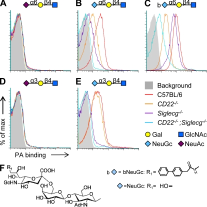 Binding analysis of various sialylated PA–glycan conjugates to wild-type compared with siglec mutant B cells. Results are representative of three independent experiments. (A–E) B cells of the indicated genotypes were stained with biotinylated PA conjugated with the following glycans: (A) NeuAcα2-6Galβ1-4GlcNAc, (B) NeuGc, (C) bNeuGc, (D) NeuAcα2-3Galβ1-4GlcNAc, and (E), NeuGcα2-3Galβ1-4GlcNAc. Binding was revealed using fluorescent <t>streptavidin.</t> Background staining by streptavidin alone is shown in gray. (F) Chemical structures of the NeuGc-containing sialosides.