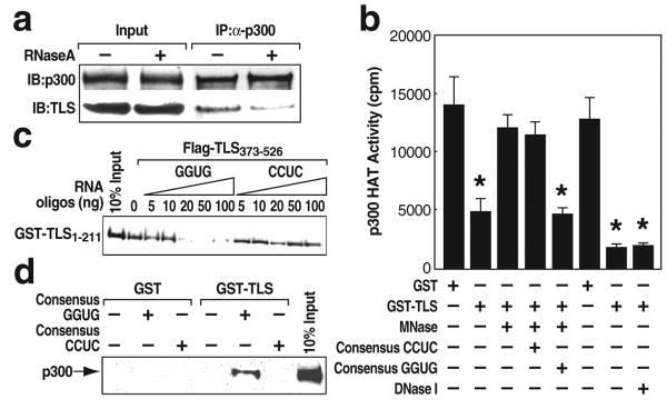 Consensus GGUG-containing RNA oligonucleotide promotes the inhibitory effect of TLS on CBP/p300 HAT activities a , Co-immunoprecipitation (IP) of p300 and TLS from <t>RNase</t> A-treated HeLa cells. b, P300 HAT activity was measured using micrococcal nuclease (MNase) or <t>DNase</t> I pre-treated GST and GST-TLS in the presence of GGUG- or CCUC-oligonucleotide. * p