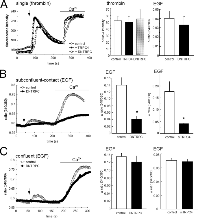 Formation of immature cell-cell contacts in proliferating HMEC-1 enables TRPC4-dependent Ca 2+ entry. A , Ca 2+ entry into thrombin or EGF-stimulated single HMEC-1 cells. Left , representative recordings of fluo-4 fluorescence intensity in single cells transfected with pcDNA3-vector (control; open circles ), TRPC4 ( closed circles ), or a functional dominant negative TRPC4 fragment (DNTRPC; squares ). Time courses during acute stimulation with 0.5 unit/ml thrombin ( arrow ) and Ca 2+ readdition (2 m m ) are shown. Center , mean values of peak fluo-4 intensity ( n > 6; open columns , control; hatched columns , TRPC4; filled columns , DNTRPC). Right , mean increases in fura-2 fluorescence ratios ( n ≥ 6) obtained during Ca 2+ readdition after stimulation with EGF (100 ng/ml). B , left , representative recordings of fura-2 fluorescence ratios in the subconfluent, contact-forming state is shown for controls (sham-transfected; open circles ) and DNTRPC-transfected ( closed circles ) cells, HMEC-1 cells were challenged with EGF (100 ng/ml; arrow ), as indicated. Right , increases in fura-2 fluorescence ratios (mean ± S.E.; n ≥ 8). C , left , representative recordings of fura-2 fluorescence ratios in the confluent, barrier-forming state is shown for controls (sham-transfected; open circles ) and DNTRPC-transfected ( closed circles ) cells, and HMEC-1 cells were challenged with EGF (100 ng/ml; arrow ), as indicated. Right , increases in fura-2 fluorescence ratios (mean ± S.E.; n ≥ 8).