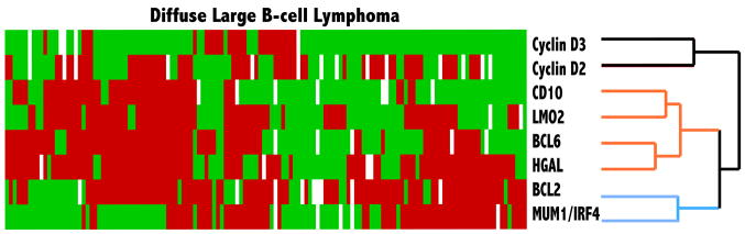 Hierarchical cluster analysis of immunohistologic data in diffuse large B-cell lymphoma Hierarchical cluster analysis shows that the expression profiles of cyclin D2 and D3 proteins are similar to each other across the 143 cases of diffuse large B-cell lymphoma, but are distinct from that of germinal center-associated markers CD10, BCL6, HGAL and LMO2, and from non-germinal center markers, BCL2 and MUM1/IRF4.