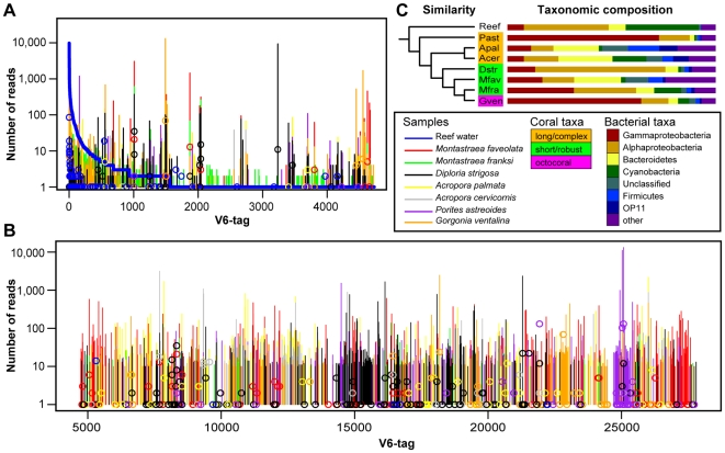 V6-tag abundance profiles, similarity clustering, and taxonomic composition of bacterial communities. (A) Rank abundance curve for V6-tags detected in reef water superimposed with abundances found in coral samples shown as vertical colored bars. (B) Abundances of V6-tags, which were detected exclusively in corals, are shown alphabetically sorted by taxonomic classification of V6-tags (x-axis). In (A) and (B), circles denote log-scaled abundances of nearly full-length 16S rRNA gene sequences that were mapped to the respective V6-tag sequences. (C) Taxonomic composition of all samples and dendrogram of OTU abundances showing similarities between samples, which are color-coded according coral host taxonomy. Details on the taxonomic composition of each sample can be found in Table S1 . Abbreviations used: Acer = Acropora cervicornis ; Apal = Acropora palmata ; Dstr = Diploria strigosa ; Gven = Gorgonia ventalina ; Mfav = Montastraea faveolata ; Mfra = Montastraea franksi ; Past = Porites astreoides ; Reef = reef water.