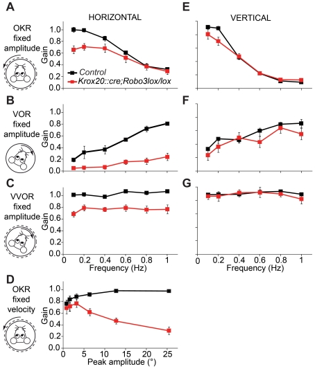 Impaired horizontal compensatory eye movements in Krox20::cre;Robo3 lox/lox mice. (A) During optokinetic stimulation horizontal gains are reduced most prominently at the lower frequencies in in Krox20::cre;Robo3 lox/lox mice ( p = 0.043 ANOVA; n = 6 versus n = 4 for controls; see Table S1 ). (B) At higher frequencies, the VOR is severely impaired ( p = 0.001 versus control mice curve; ANOVA for repeated measurements; Table S1 ), confirming the importance of the commissural connections in large-amplitude eye movements. (C) When horizontal visual and vestibular inputs are combined in the VVOR (visual vestibulo-ocular reflex), it results in lower gains over the entire range of frequencies tested ( p = 0.004 versus control mice curve; ANOVA for repeated measurements). (D) OKR deficits are strongly correlated to the amplitude of stimulation. (E–G) In marked contrast, in the vertical plane, no significant differences were observed in OKR (E), VOR (F), or VVOR (G), supporting the concept that primarily horizontal eye movements require the presence of commissural connections (see Table S1 for all statistics). Error bars indicate standard error of the mean. Results were obtained from four control and six Krox20::cre;Robo3 lox/lox mice .