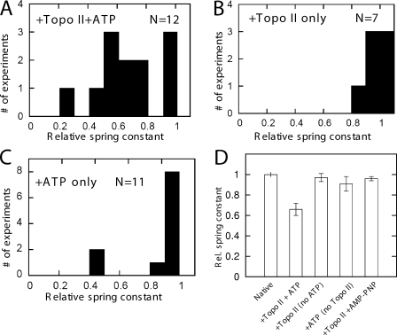 Relaxation of mitotic chromosomes by topo II requires hydrolysable ATP. (A) Results of 12 experiments of the type shown in Fig. 1 , showing the ratio of the spring constant after topo II + ATP treatment to native spring constant. More than 20% relaxation occurred in nine of the trials. (B) Results of seven experiments where topo II in AB (no ATP) was sprayed for 30 min. No large relaxations occurred, and in three runs, a slight increase in stiffness was observed. (C) Histogram for 11 experiments where ATP in AB was used for 30 min; in 8/11 experiments, little or no relaxation occurred, but in 3/11 experiments, significant relaxation occurred. (D) Summary of experiments with different enzyme–nucleotide combinations. Height of bars shows relative spring constants normalized to the native (untreated) chromosome spring constant; error bars indicate standard error for each set of experiments. The 35% relaxation effect observed for topo II + ATP (second bar) does not occur for topo II with no ATP (third bar). A small relaxation effect occurs for ATP with no topo II (fourth bar), suggesting that ATPases on the chromosome are active. Experiments with topo II + AMP-PNP (fifth bar) generated nearly no relaxation.
